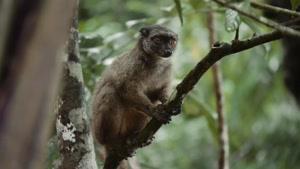 سفر به ماداگاسکار