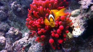 سفری جذاب به دنیای زیر آب