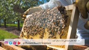 معرفی ۱۰ حشره مفید برای مبارزه ارگانیک با آفات
