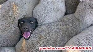 آپارات _ ماجرای عکس سگی که در فضای مجازی غوغا به پا کرد!