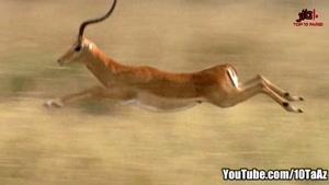 آیا می دانستید _ ۱۰ تا از حیوانات رکورد شکن