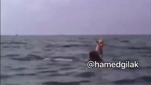 صدا گذاری خفن نجات سگ توسط دلفین 😂