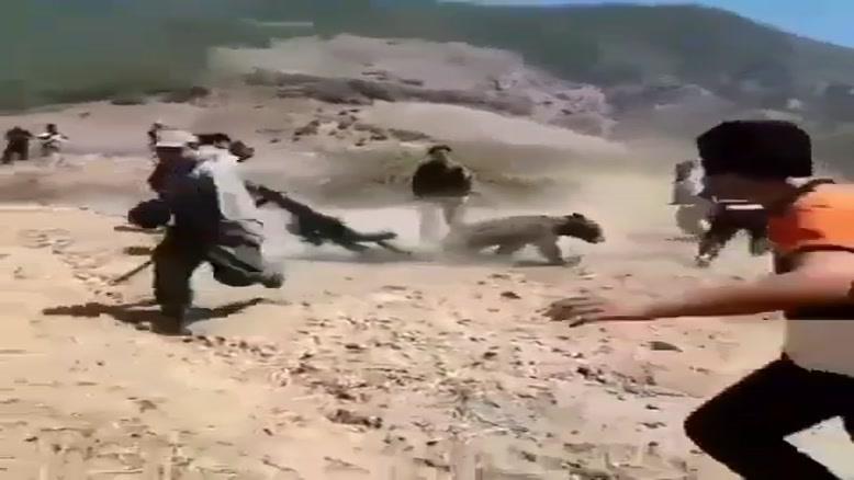 خرس گیری به روش ایرانی با پتو!