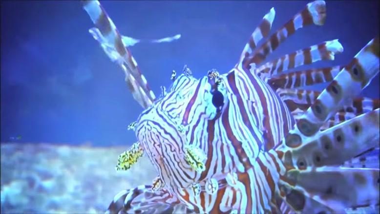 ماهی های شگفت انگیز از سراسر جهان