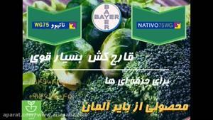 سم قارچ کش ناتیوو | Nativo 75 wg مصونیت 100% در برابر بیماری مزارع کلم