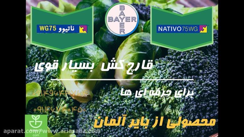 سم قارچ کش ناتیوو   Nativo 75 wg مصونیت 100% در برابر بیماری مزارع کلم