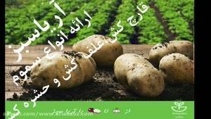خرید قارچ کش خارجی مزارع سیب زمینی | اینفینیتو | Infinito