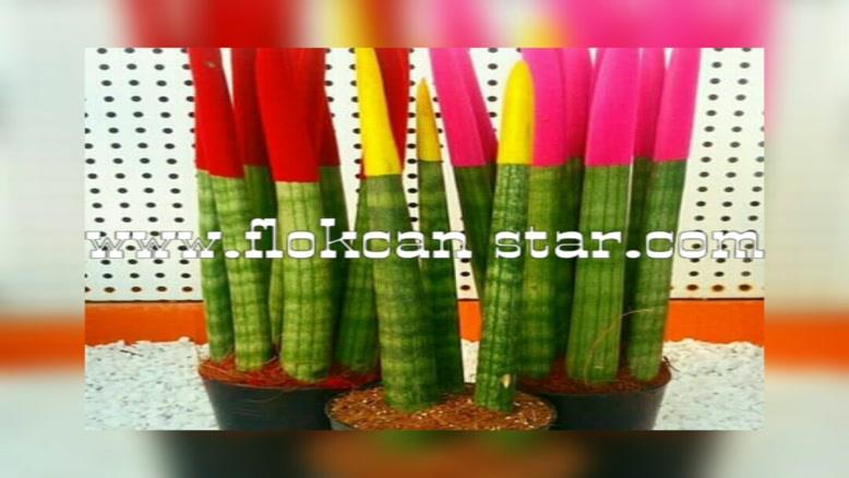 فروش عمده پودر مخمل ایرانی02156571497