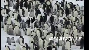 صدا گذاری اعتراضات سراسری پنگوئن ها به اسماعیل لینکون😂