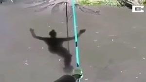 بند بازی روی رودخانه با تمساح های گرسنه !😰