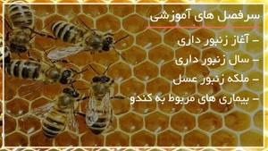 زنبورداری در باغچه منزل