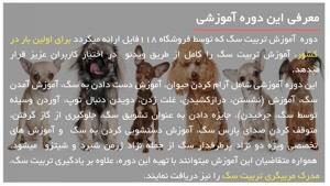 نصب قلاده برای سگ ژرمن