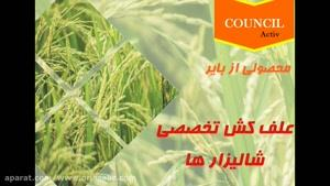 سم علف کش بسیار قوی مخصوص مزارع برنج، کانسیل اکتیو | Council activ