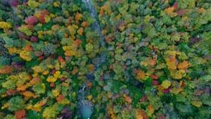 طبیعت زیبای جنگلهای هیرکانی