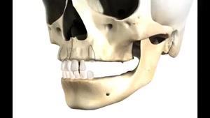 مراحل رشد دندان های شیری و دائمی