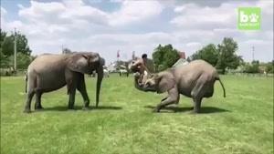 نماشا - نمایش آکروباتیک فیل و فیلبان-4
