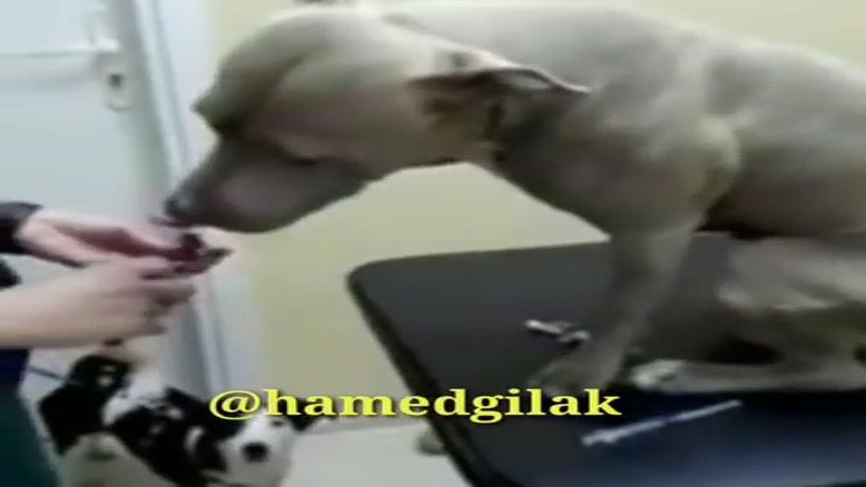 صدا گذاری خنده دار آمپول زدن سگ