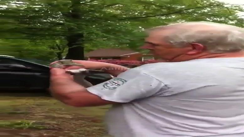کلیپی تاثیر گذار از رها کردن یک سنجاب به طبیعت