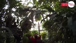 پالمن گارتن آلمان - Palmen Garten Germany - تعیین وقت سفارت آلمان