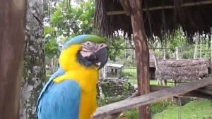مناظر دیدنی جنگل پرو آمازون