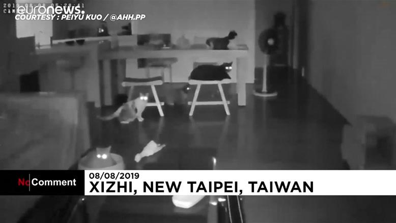 واکنش گربهها به زلزله