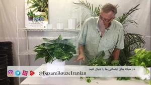 ساخت گلخانه های کوچک مخصوص شما