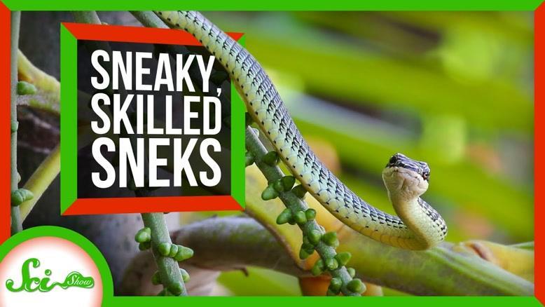 با خطرناک ترین مارهای طبیعت آشنا شوید