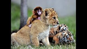 زیباترین حیوانات حیات وحش