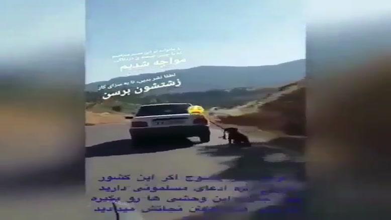 سگ آزاری جدید در یاسوج