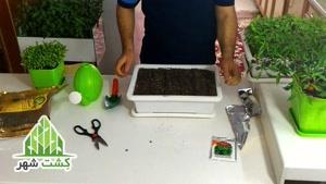 آموزش کاشت سبزی در منزل