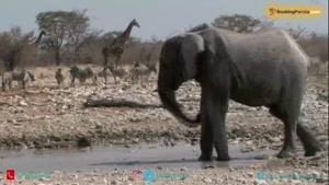 پارک ملی آتوشا، گنجینه حیات وحش در نامیبیا - بوکینگ پرشیا