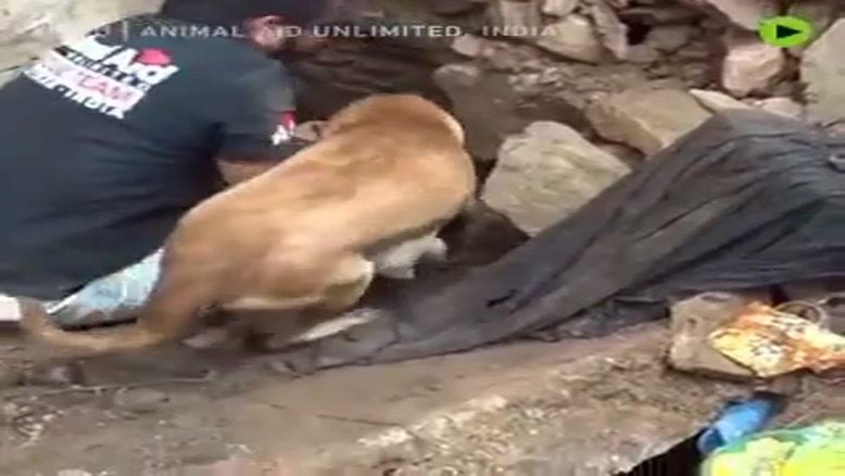 سگی که تلاش میکند فرزندان خود را از زیر آوار نجات دهد