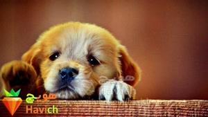 ۱۲ دلیل نداشتن حیوان خانگی