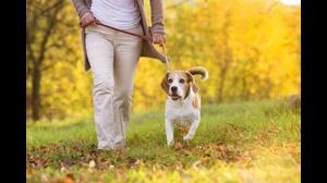حیوان خانگی چه شرایطی را لازم دارد؟