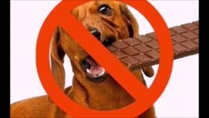 ۱۰ تا از غذاهایی که هرگز به سگها نباید داد!