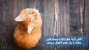 حقایقی درباره گربه ها