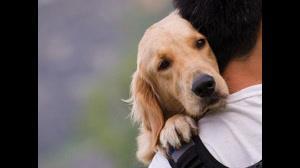 اهمیت و اثرات داشتن حیوانات خانگی