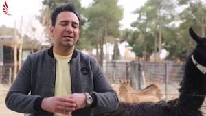مستند کوتاه سگ گردانی در ایران
