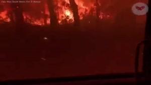 کشته شدن میلیون ها حیوان در آتش سوزی استرالیا