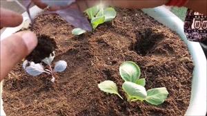 8 گیاه خوراکی که میتوان به راحتی در منزل کشت کرد