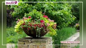 معرفی 3 گل گلدانی فوق العاده !