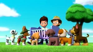 کارتون سگهای نگهبان با داستان کودک
