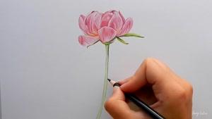 آموزش نقاشی گل رز صورتی با مداد رنگی