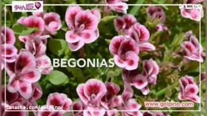 10 گل فوق العاده ای که نگهداری آسانی دارند