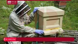 پرورش زنبور عسل / روش مبارزه با پرندگان زنبور خوار
