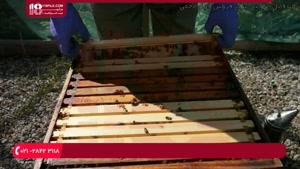 نحوه تولید زنبور عسل طبیعی | ساخت کندو چوبی