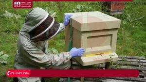 نکات قابل توجه در مورد نگهداری از کندو عسل در فصول مختلف سال