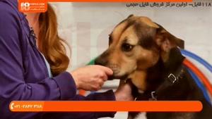 آموزش دستور همراه من یا با من به سگ خانگی