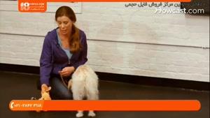 تربیت سگ برای تنها موندن بدون اینکه ناله یا زوزه بکنه