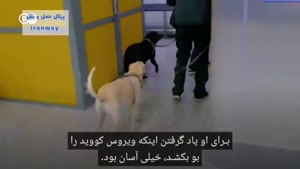 سگ کرونا یاب در فرودگاه هلسینکی